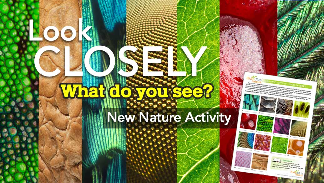 Look Closely Nature activity sheet