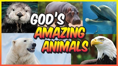 God's Amazing Animals