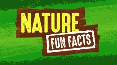 Nature Fun Facts